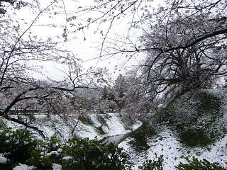 20130421鶴ヶ城(その17)
