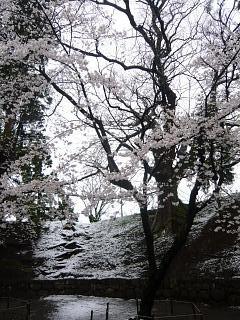 20130421鶴ヶ城(その22)