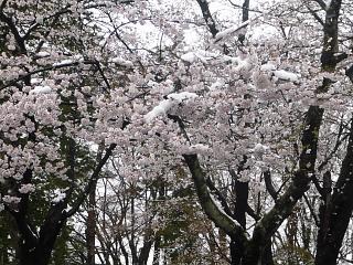 20130421鶴ヶ城(その24)