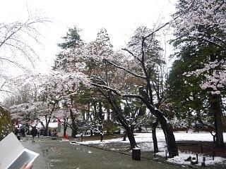 20130421鶴ヶ城(その25)