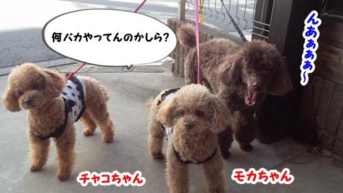 モカちゃん&チャコちゃん&ザック