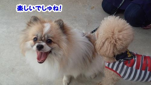 モカ雄&チーポン5