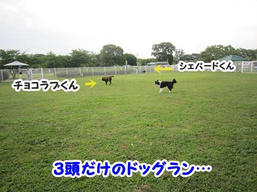 ドッグラントレーニング2