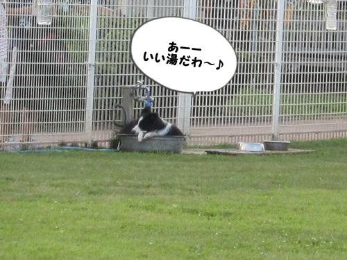 ドッグラントレーニング13