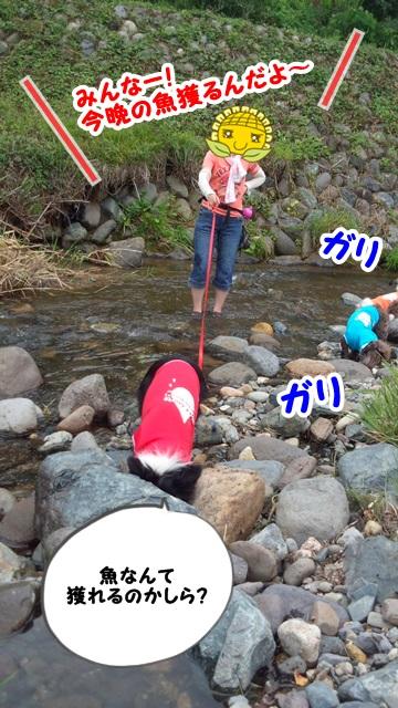ブルーベリーと川遊び4