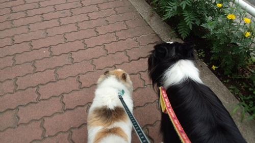 休日の朝散歩1