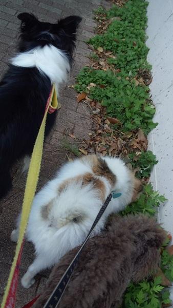 休日の朝散歩♪