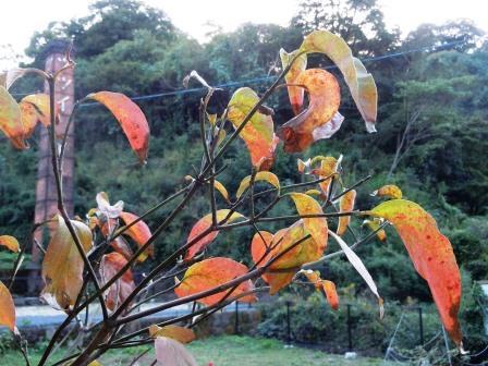 秋の色1(2013-10-13)