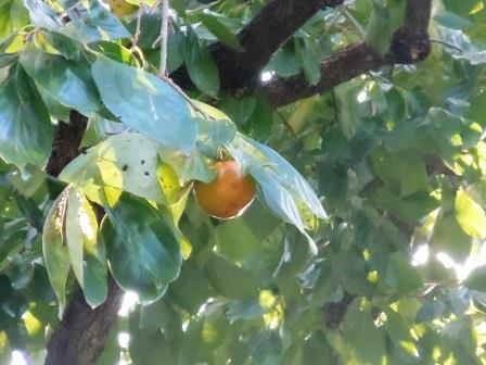 秋の色3(2013-10-13)