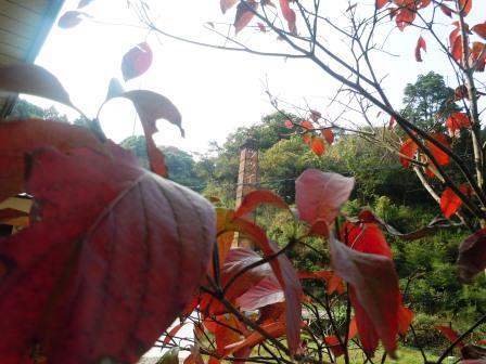 ハナミズキ(2013-11-09)