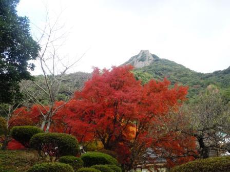 泉山紅葉2(2013-11-20).