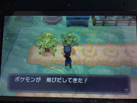 きのみ畑2