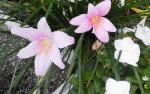 2013秋の花2
