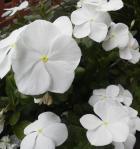 2013秋の花3
