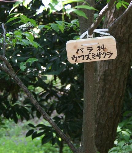 uwazumizakura 20130518 251 tori 40per