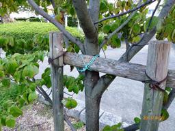 UR北倒れた木修復