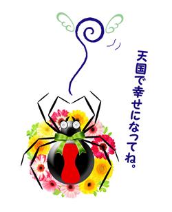 セアカゴケグモご臨終
