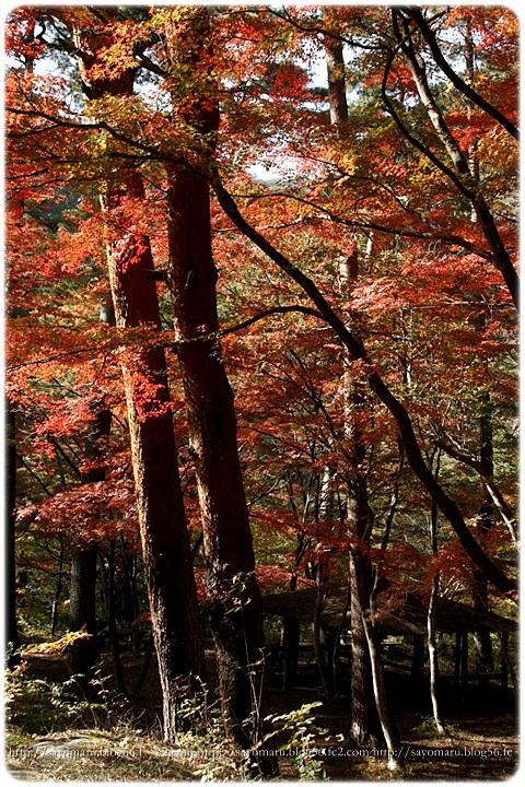 sayomaru7-676.jpg