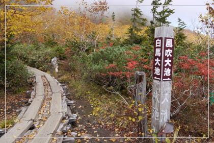 131006tsugaike_oike8.jpg