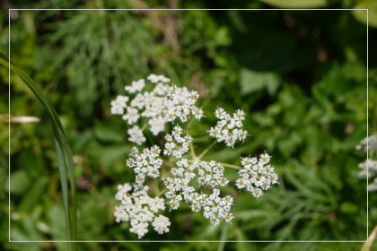 20130814kmflower12.jpg
