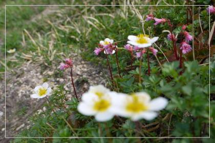 20130814kmflower18.jpg