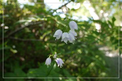 20130814kmflower2.jpg