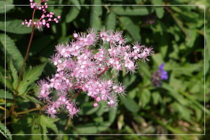 20130814kmflower25.jpg