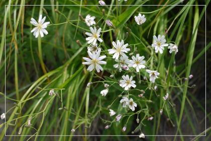 20130814kmflower26.jpg