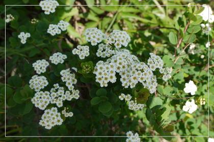 20130814kmflower29.jpg
