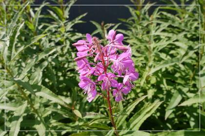 20130814kmflower33.jpg