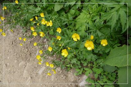 20130814kmflower34.jpg