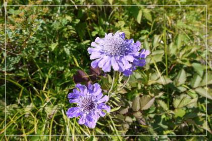20130814kmflower4.jpg