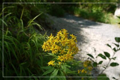 20130814kmflower7.jpg