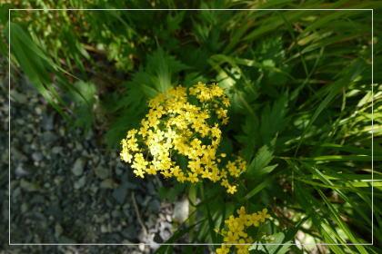 20130814kmflower8.jpg