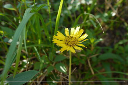20130814kmflower9.jpg