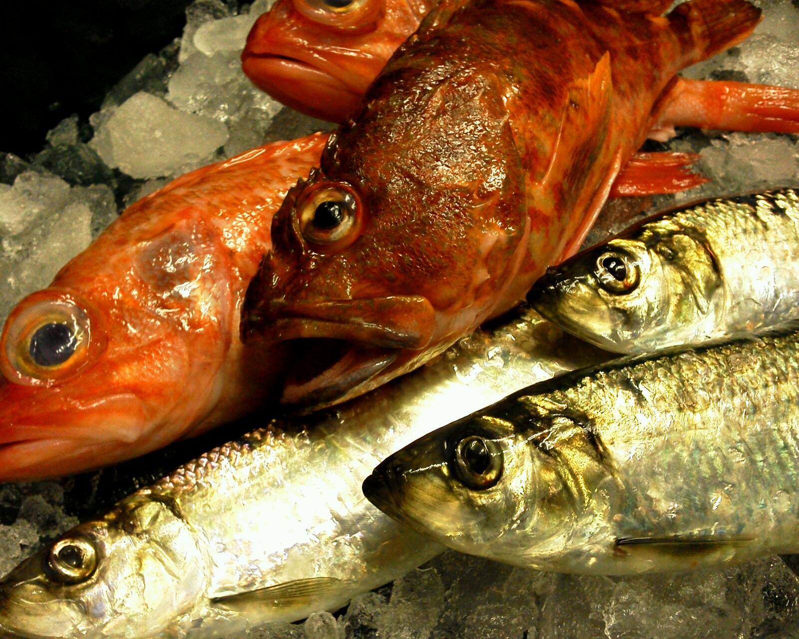 魚0224