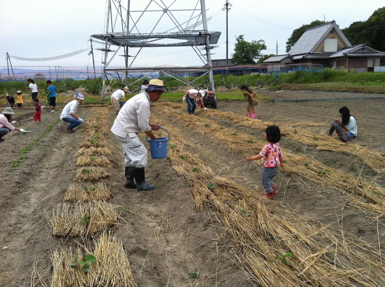 201305-06+053肥料やり1_convert_20130621111231