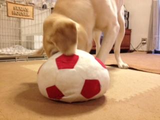 サッカーボールとセナ