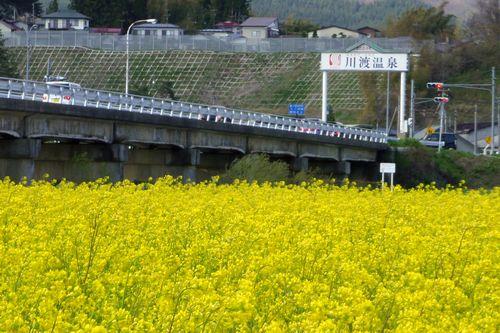 桜花見2013川渡温泉1川渡大橋