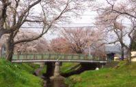 桜花見2013川渡温泉9湯沢川