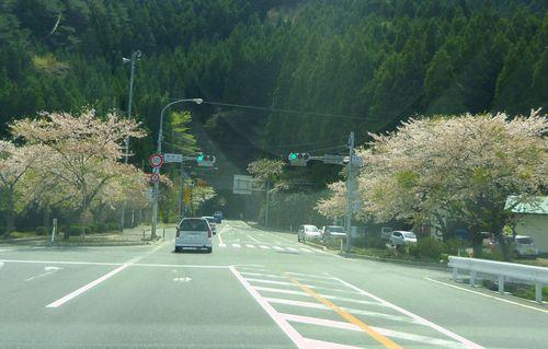旧三陸町被災状況3国道45号桜