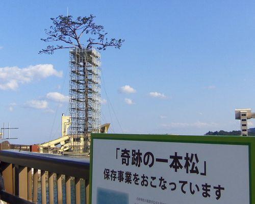 陸前高田1奇跡の一本松