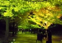 紅葉2013あづま総合運動公園イチョウ並木2