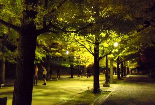 紅葉2013あづま総合運動公園イチョウ並木3