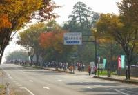 紅葉2013あづま総合運動公園イチョウ並木8