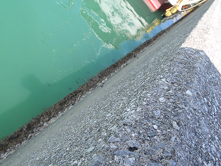 桟橋の壁面に貝