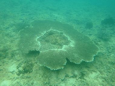 サンゴ02
