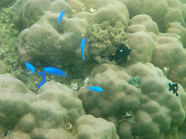 熱帯魚02