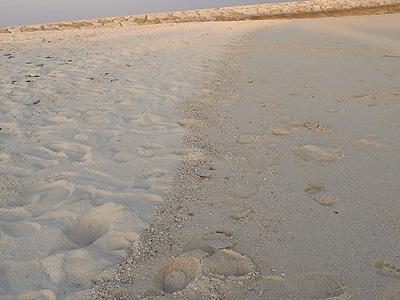 西原のビーチ02