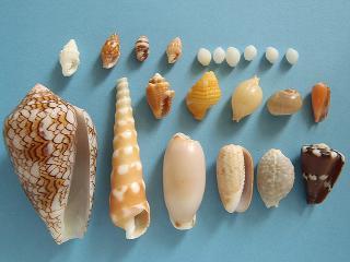 A&W浜の採集結果